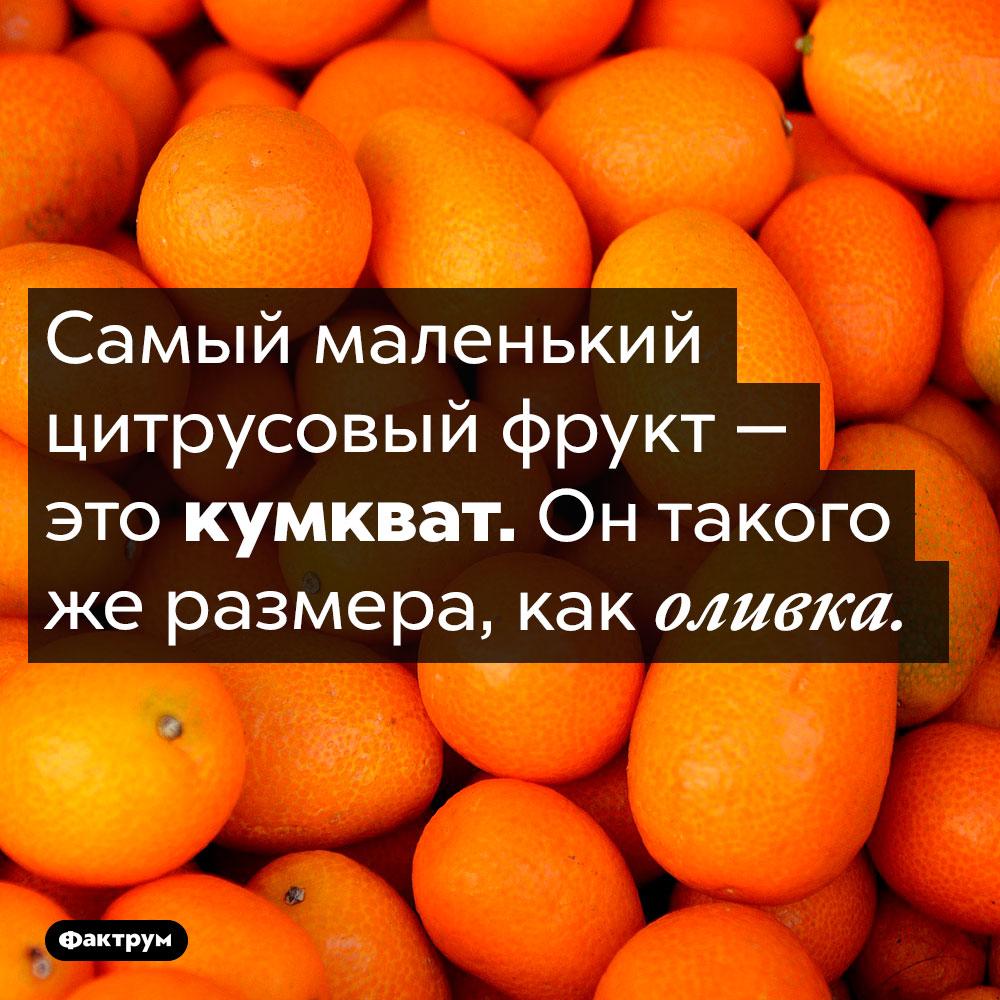 Самый маленький цитрусовый фрукт. Самый маленький цитрусовый фрукт — это кумкват. Он такого же размера, как оливка.