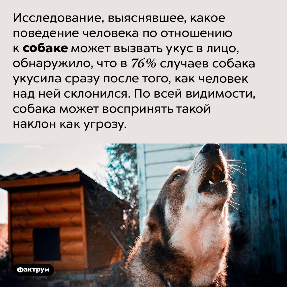 Ненаклоняйтесь над собаками, если нехотите получить укус влицо.  Исследование, выяснявшее, какое поведение человека по отношению к собаке может вызвать укус в лицо, обнаружило, что в 76% случаев собака укусила сразу после того, как человек над ней склонился. По всей видимости, собака может воспринять такой наклон как угрозу.