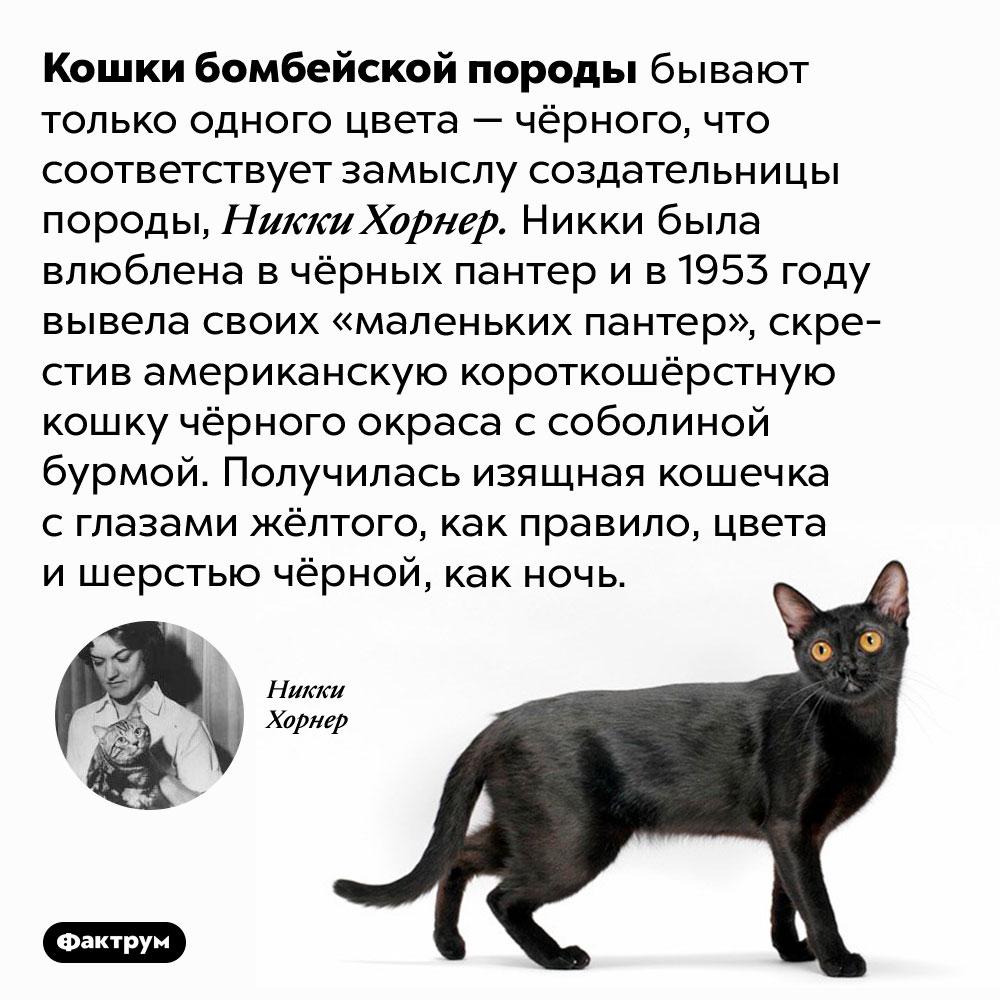 Есть порода кошек, похожих напантер вминиатюре. Кошки бомбейской породы бывают только одного цвета — чёрного, что соответствует замыслу создательницы породы, Никки Хорнер. Никки была влюблена в чёрных пантер и в 1953 году вывела своих «маленьких пантер», скрестив американскую короткошёрстную кошку чёрного окраса с соболиной бурмой. Получилась изящная кошечка с глазами жёлтого, как правило, цвета и шерстью чёрной, как ночь.