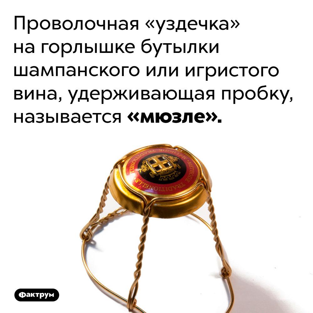 Что такое «мюзле». Проволочная «уздечка» на горлышке бутылки шампанского или игристого вина, удерживающая пробку, называется «мюзле».