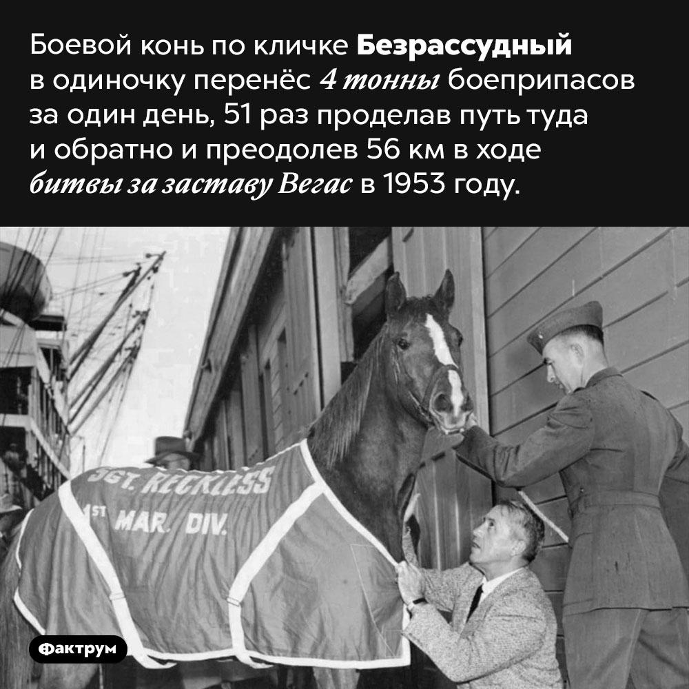 Сержант Безрассудный. Боевой конь по кличке Безрассудный в одиночку перенёс 4 тонны боеприпасов за один день, 51 раз проделав путь туда и обратно и преодолев 56 км в ходе битвы за заставу Вегас в 1953 году.