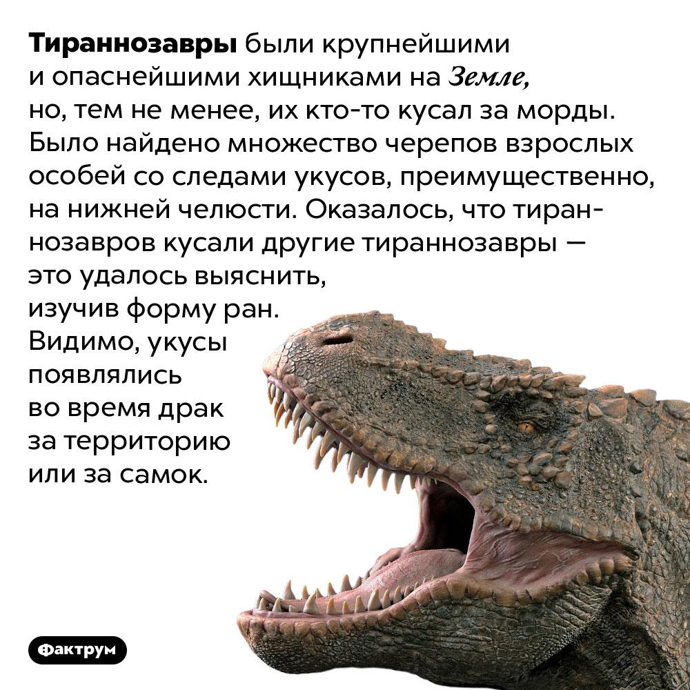Тираннозавры кусали друг друга заморды. Тираннозавры были крупнейшими и опаснейшими хищниками на Земле, но, тем не менее, их кто-то кусал за морды. Было найдено множество черепов взрослых особей со следами укусов, преимущественно, на нижней челюсти. Оказалось, что тираннозавров кусали другие тираннозавры — это удалось выяснить, изучив форму ран. Видимо, укусы появлялись во время драк за территорию или за самок.
