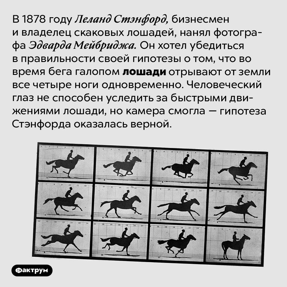 Вовремя бега галопом лошади отрывают отземли все четыре ноги одновременно. В 1878 году Леланд Стэнфорд, бизнесмен и владелец скаковых лошадей, нанял фотографа Эдварда Мейбриджа. Он хотел убедиться в правильности своей гипотезы о том, что во время бега галопом лошади отрывают от земли все четыре ноги одновременно. Человеческий глаз не способен уследить за быстрыми движениями лошади, но камера смогла — гипотеза Стэнфорда оказалась верной.