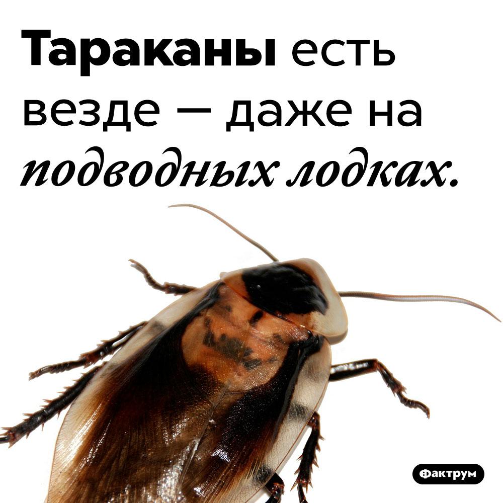 На подводных лодках тоже живут тараканы. Тараканы есть везде — даже на подводных лодках.