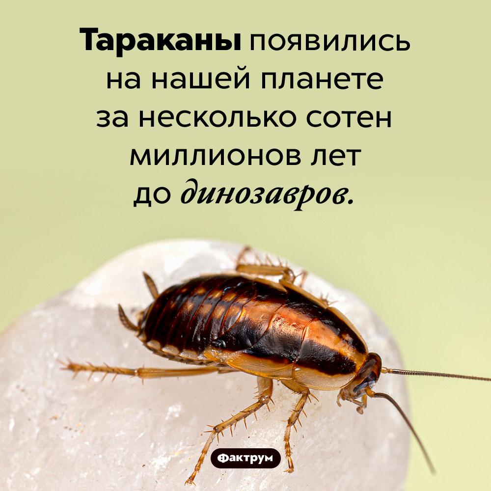 Тараканы старше динозавров. Тараканы появились на нашей планете за несколько сотен миллионов лет до динозавров.