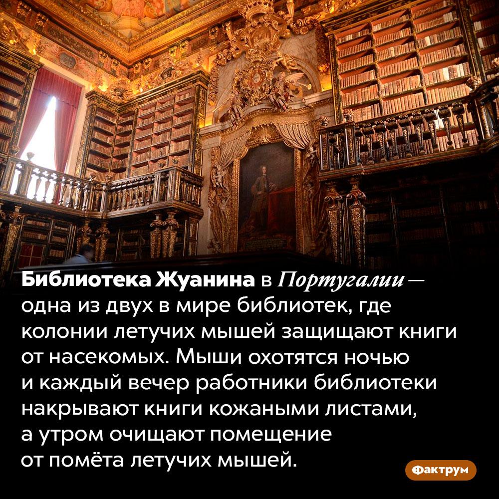 Библиотека, вкоторой летучие мыши защищают книги отнасекомых. Библиотека Жуанина в Португалии — одна из двух в мире библиотек, где колонии летучих мышей защищают книги от насекомых. Мыши охотятся ночью и каждый вечер работники библиотеки накрывают книги кожаными листами, а утром очищают помещение от помёта летучих мышей.