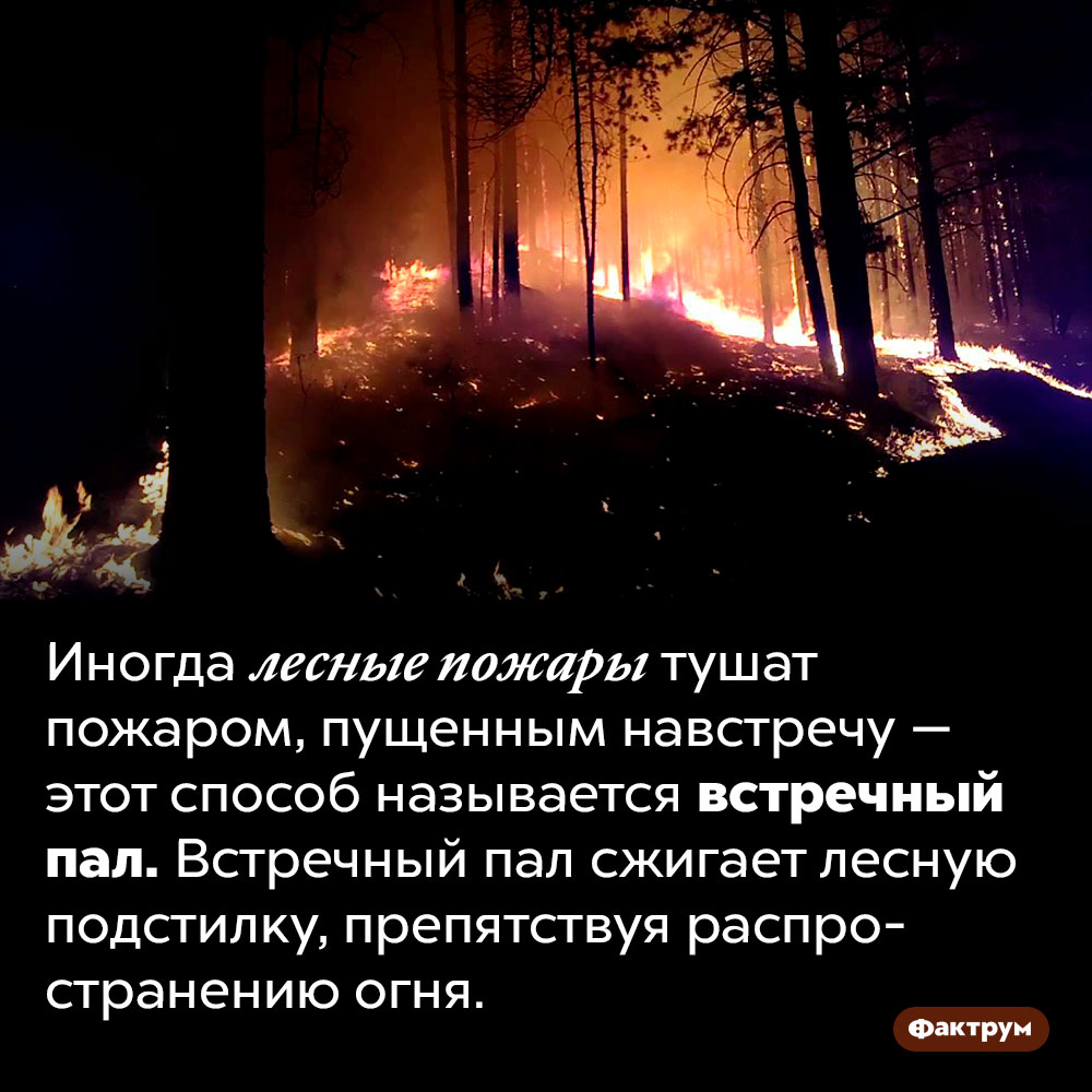 Как потушить пожар пожаром. Иногда лесные пожары тушат пожаром, пущенным навстречу — этот способ называется встречный пал. Встречный пал сжигает лесную подстилку, препятствуя распространению огня.