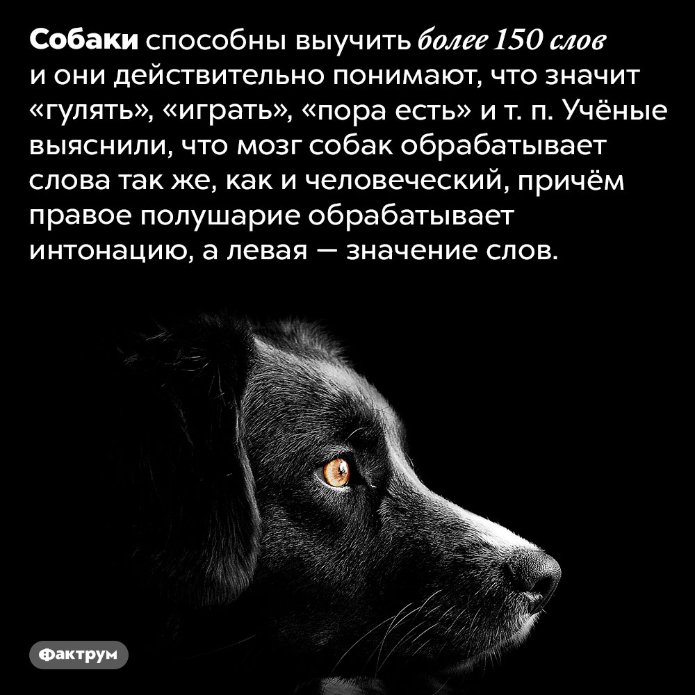 Собаки распознают человеческую речь так же, как люди. Собаки способны выучить более 150 слов и они действительно понимают, что значит «гулять», «играть», «пора есть» и т. п. Учёные выяснили, что мозг собак обрабатывает слова так же, как и человеческий, причём правое полушарие обрабатывает интонацию, а левая — значение слов.