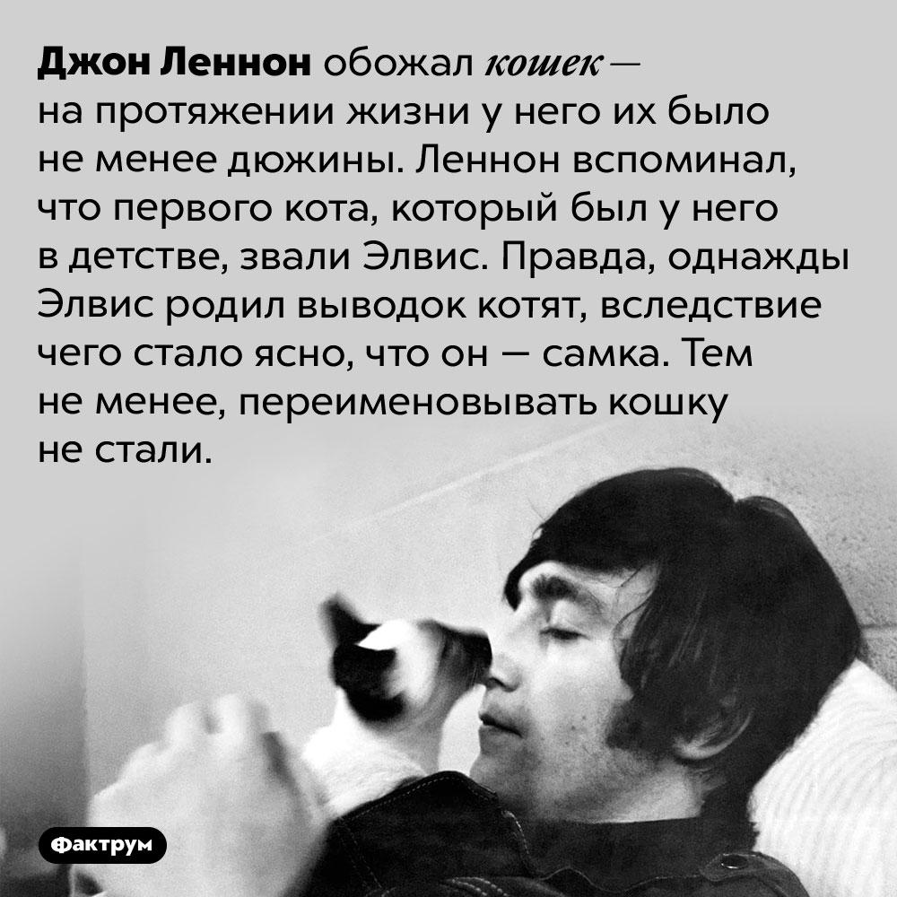 Однажды кот Джона Леннона преподнёс ему сюрприз. Джон Леннон обожал кошек — на протяжении жизни у него их было не менее дюжины. Леннон вспоминал, что первого кота, который был у него в детстве, звали Элвис. Правда, однажды Элвис родил выводок котят, вследствие чего стало ясно, что он — самка. Тем не менее, переименовывать кошку не стали.
