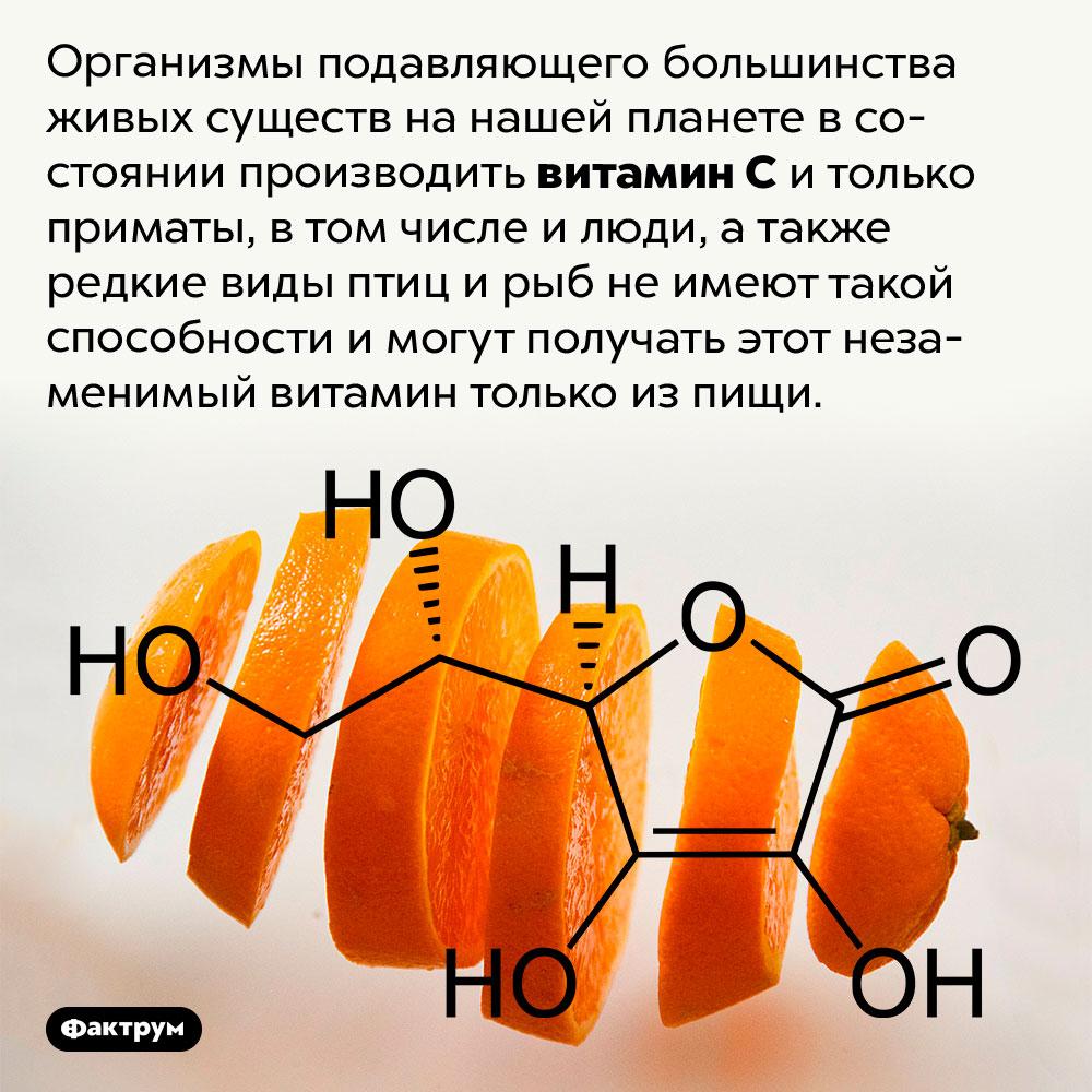 Почти все организмы могут синтезировать витаминC, нолюди — нет. Организмы подавляющего большинства живых существ на нашей планете в состоянии производить витамин C и только приматы, в том числе и люди, а также редкие виды птиц и рыб не имеют такой способности и могут получать этот незаменимый витамин только из пищи.