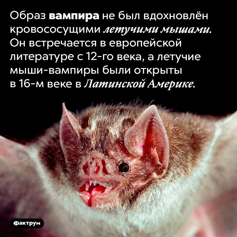 Образ вампира возник того, как европейцы узнали осуществовании кровососущих летучих мышей. Образ вампира не был вдохновлён кровососущими летучими мышами. Он встречается в европейской литературе с 12-го века, а летучие-мыши вампиры были открыты в 16-м веке в Латинской Америке.