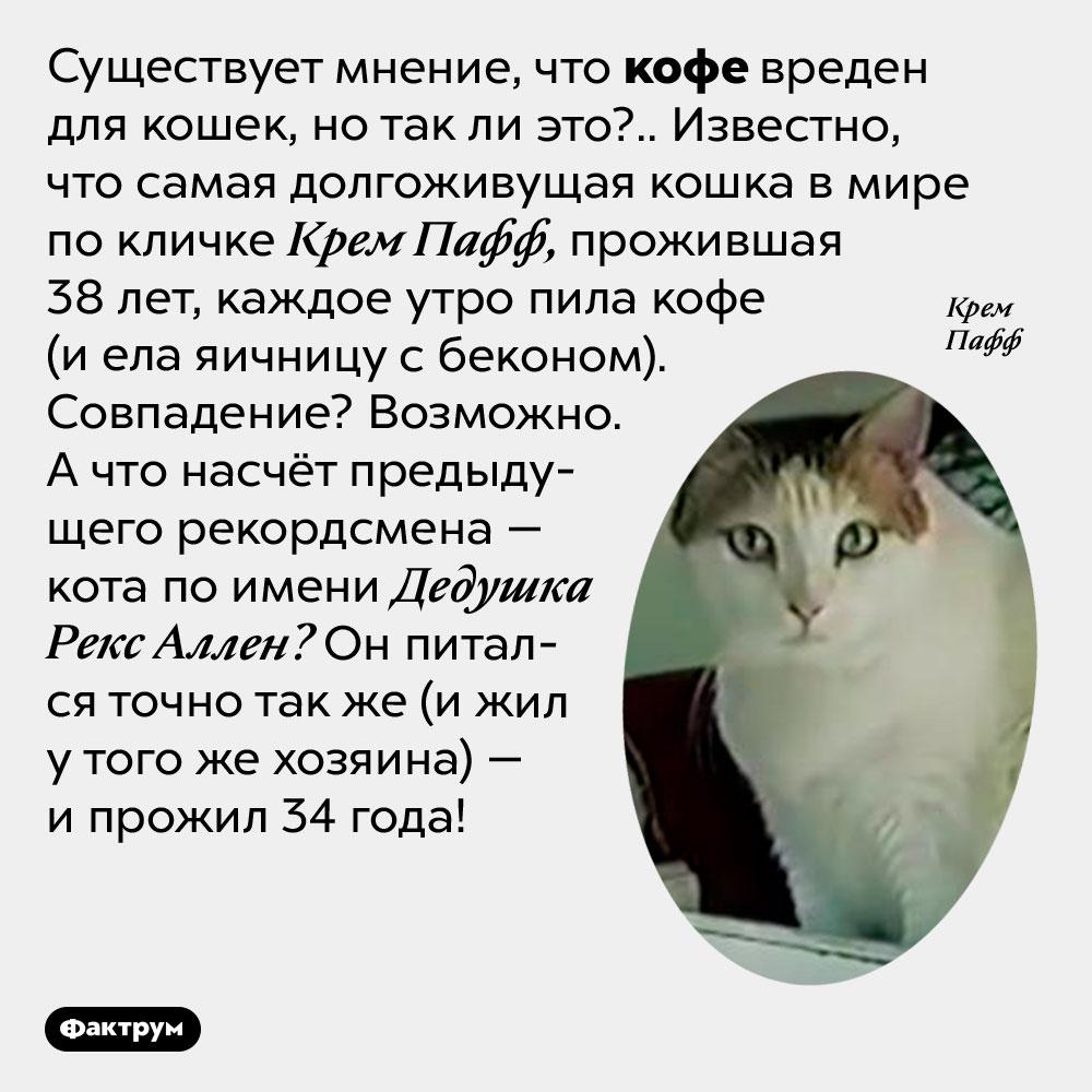 Самая старая кошка пила кофе каждый день. Существует мнение, что кофе вреден для кошек, но так ли это?.. Известно, что самая долгоживущая кошка в мире по кличке Крем Пафф, прожившая 38 лет, каждое утро пила кофе (и ела яичницу с беконом). Совпадение? Возможно. А что насчёт предыдущего рекордсмена — кота по имени Дедушка Рекс Аллен? Он питался точно так же (и жил у того же хозяина) — и прожил 34 года!