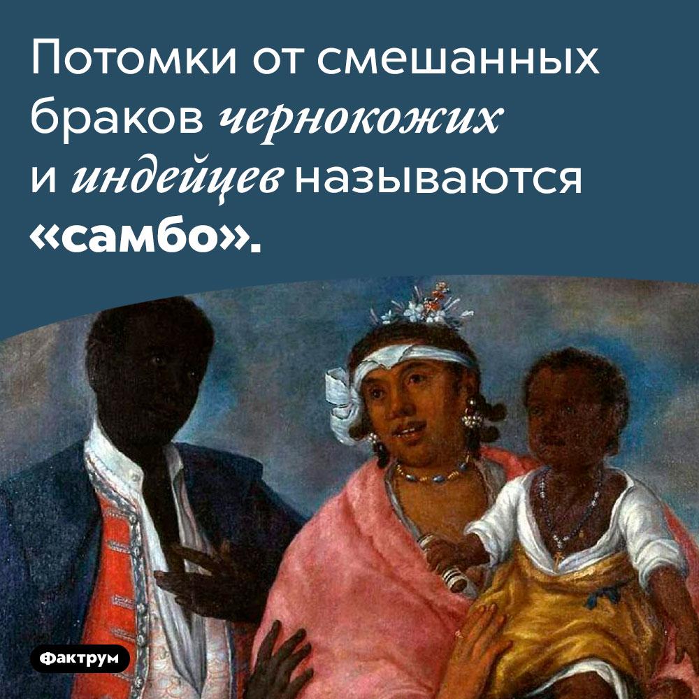 Кто такие «самбо». Потомки от смешанных браков чернокожих и индейцев называются «самбо».
