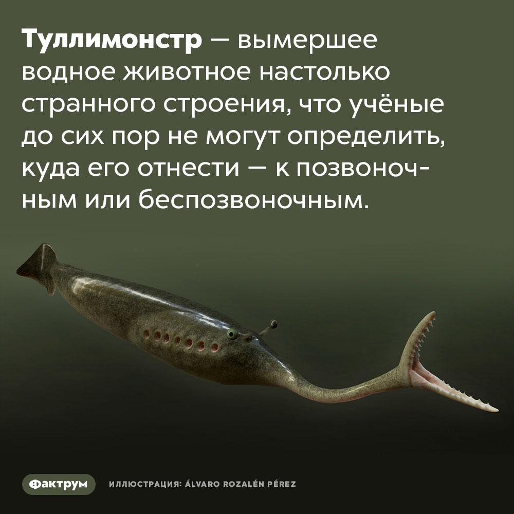 Очень странный туллимонстр. Туллимонстр — вымершее водное животное настолько странного строения, что учёные до сих пор не могут определить, куда его отнести — к позвоночным или беспозвоночным.