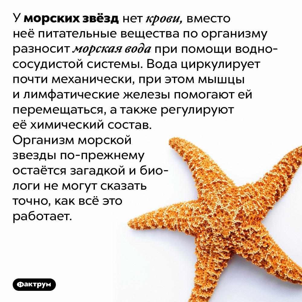 У морских звёзд вместо крови вода. У морских звёзд нет крови, вместо неё питательные вещества по организму разносит морская вода при помощи водно-сосудистой системы. Вода циркулирует почти механически, при этом мышцы и лимфатические железы помогают ей перемещаться, а также регулируют её химический состав. Организм морской звезды по-прежнему остаётся загадкой и биологи не могут сказать точно, как всё это работает.