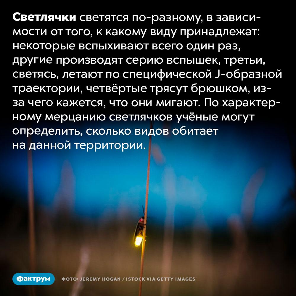 Светлячки светятся по-разному. Светлячки светятся по-разному, в зависимости от того, к какому виду принадлежат: некоторые вспыхивают всего один раз, другие производят серию вспышек, третьи, светясь, летают по специфической J-образной траектории, четвёртые трясут брюшком, из-за чего кажется, что они мигают. По характерному мерцанию светлячков учёные могут определить, сколько видов обитает на данной территории.