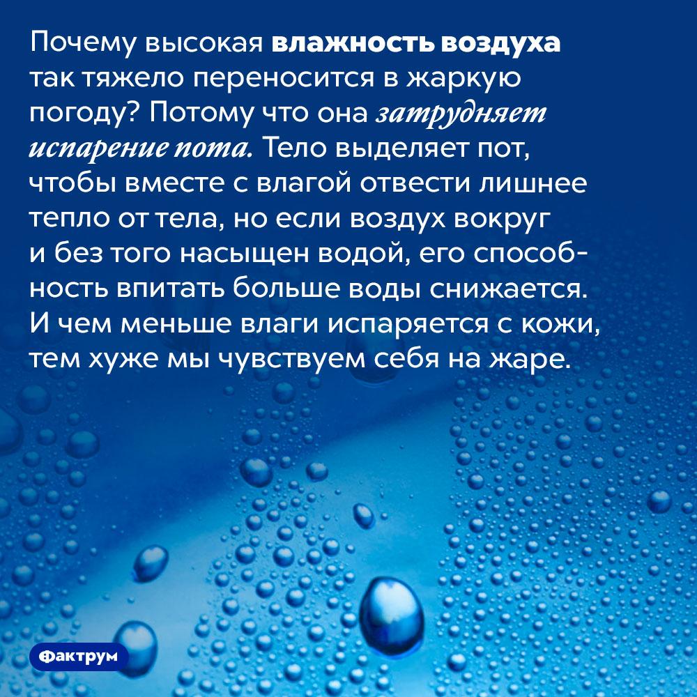 Почему высокая влажность воздуха тяжело переносится вжару. Почему высокая влажность воздуха так тяжело переносится в жаркую погоду? Потому что она затрудняет испарение пота. Тело выделяет пот, чтобы вместе с влагой отвести лишнее тепло от тела, но если воздух вокруг и без того насыщен водой, его способность впитать больше воды снижается. И чем меньше влаги испаряется с кожи, тем хуже мы чувствуем себя на жаре.