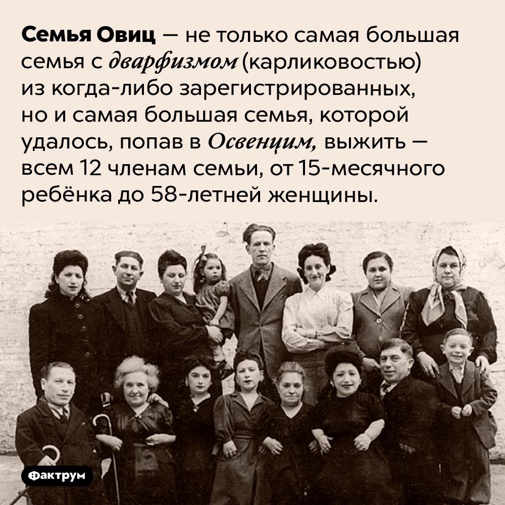 Семья Овиц — самая большая семья с карликовостью исамая большая семья, выжившая вОсвенциме. Семья Овиц — не только самая большая семья карликов из когда-либо зарегистрированных, но и самая большая семья, которой удалось, попав в Освенцим, выжить — всем 12 членам семьи, от 15-месячного ребёнка до 58-летней женщины.