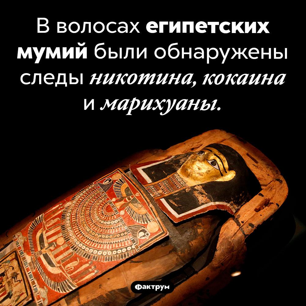 Наркотики вволосах мумий. В волосах египетских мумий были обнаружены следы никотина, кокаина и марихуаны.