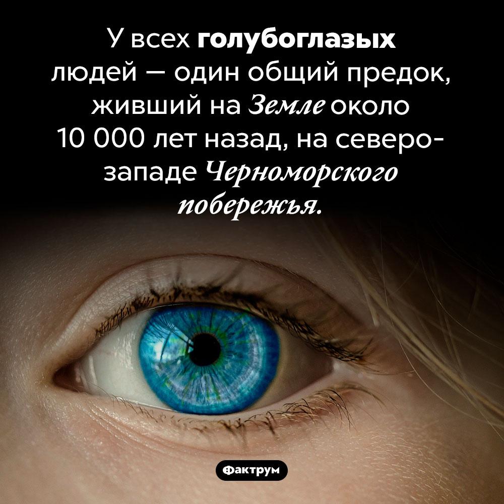 Общий предок голубоглазых людей. У всех голубоглазых людей — один общий предок, живший на Земле около 10 000 лет назад, на северо-западе Черноморского побережья.