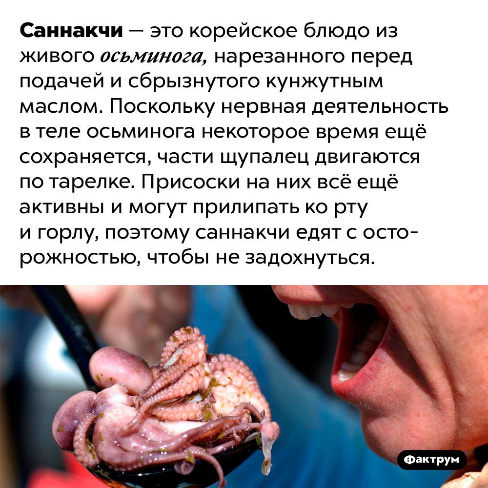 Почему живых осьминогов надо есть осторожно. Саннакчи — это корейское блюдо из живого осьминога, нарезанного перед подачей и сбрызнутого кунжутным маслом. Поскольку нервная деятельность в теле осьминога некоторое время ещё сохраняется, части щупалец двигаются по тарелке. Присоски на них всё ещё активны и могут прилипать ко рту и горлу, поэтому саннакчи едят с осторожностью, чтобы не задохнуться.