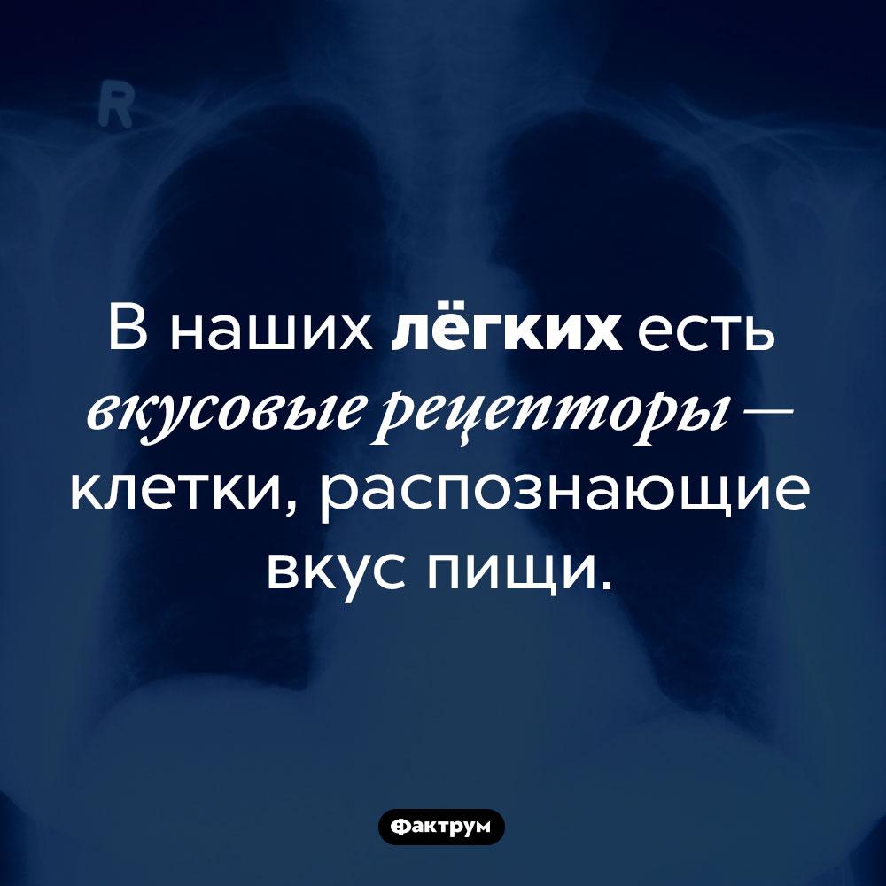 Лёгкие участвуют впроцессе распознавания вкуса. В наших лёгких есть вкусовые рецепторы — клетки, распознающие вкус пищи.