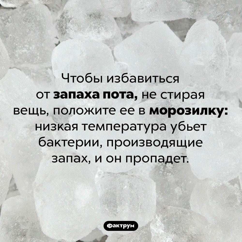 Как убрать запаха пота, нестирая вещь. Чтобы избавиться от запаха пота, не стирая вещь, положите ее в морозилку: низкая температура убьет бактерии, производящие запах, и он пропадет.