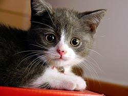 65 фактов о кошках. 13
