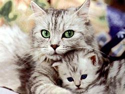 65 фактов о кошках. 23