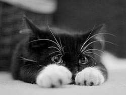 65 фактов о кошках. 32