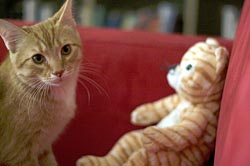 65 фактов о кошках. 42