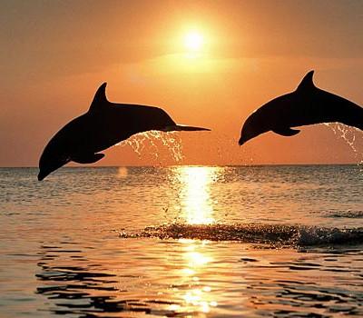 Дельфины обладают умением в точности повторять движения своих собратьев, даже если не видят, что они делают