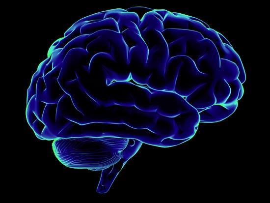 Большую часть потребляемой энергии мозг тратит неизвестно на что