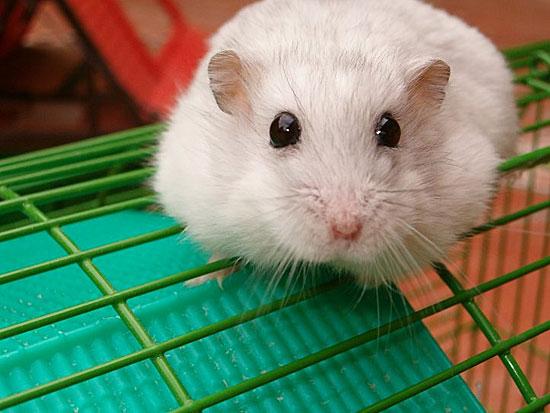 Мыши без достаточного количества серотонина в организме становятся геями