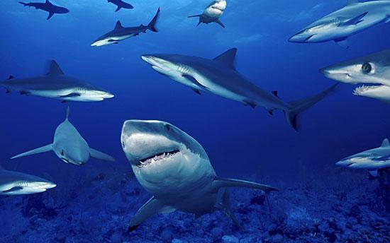 20 фактов об акулах