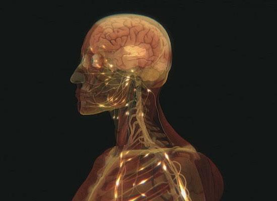 10 фактов о человеческом теле