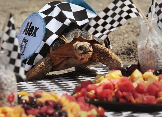 Zoopolis 500 — самые медленные гонки в мире