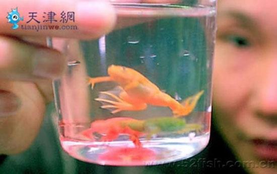 В Китае для продажи красят лягушек в яркие цвета