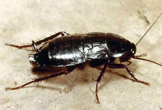 Таракан может жить без головы несколько дней. И голова без таракана тоже.