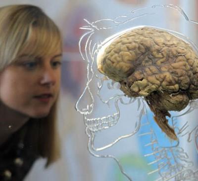 Человеческий мозг уже достиг предела развития