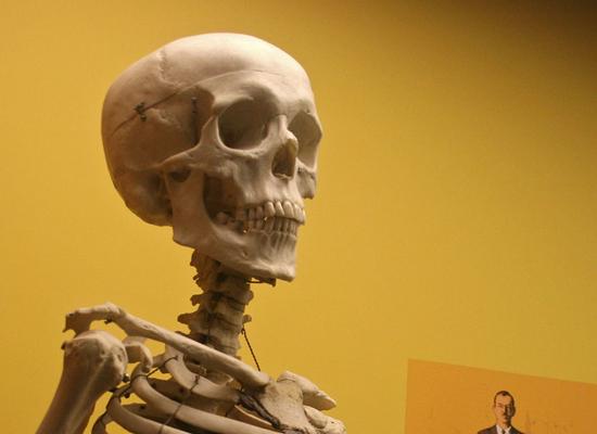 Иногда в качестве учебного пособия используются настоящие человеческие скелеты