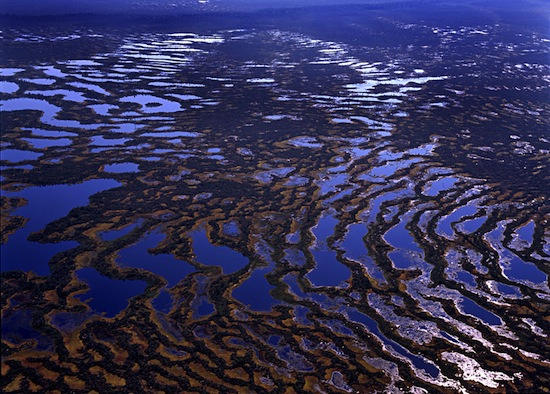 В Сибири находится самое большое на Земле болото площадью 53 000 кв. км