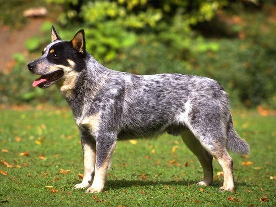 Из умерших собак можно делать подушки, пластинки, ожерелья, пули, бриллианты и свитера