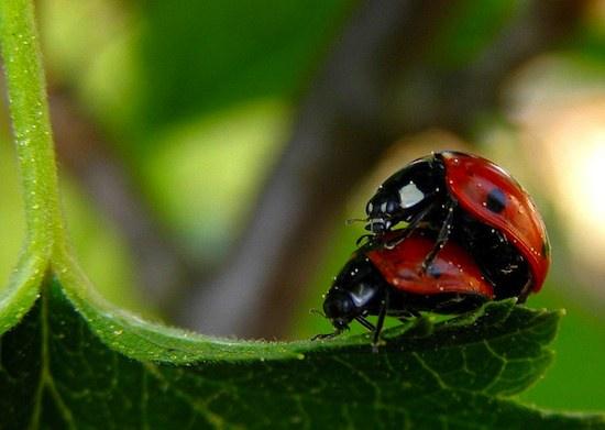 10 фактов о сексе в мире животных