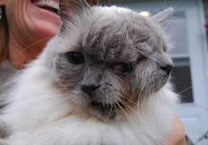 У кота по кличке Фрэнк и Луи две морды