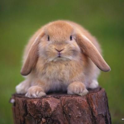 27 сентября — Международный день кролика. 7 фактов о кроликах