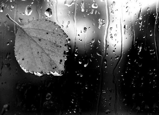 Запах, остающийся в воздухе после дождя, называется Петричор (Petrichor)
