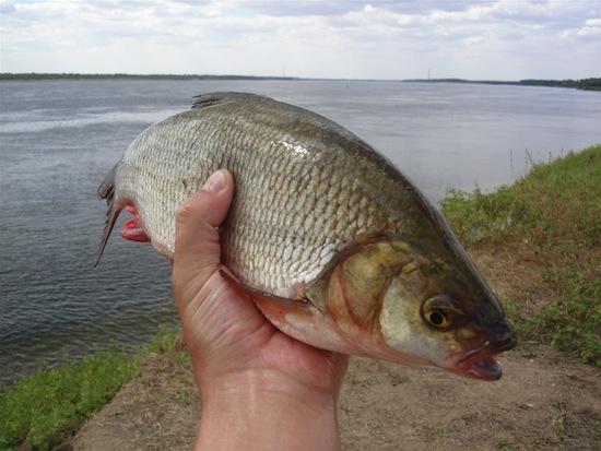 Существует заболевание, при котором от человека всё время пахнет гнилой рыбой
