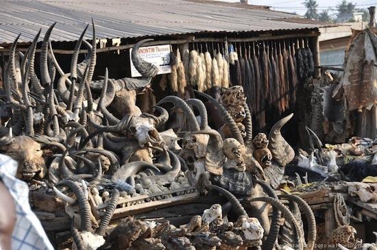 В Того есть крупнейший в мире рынок для колдунов вуду