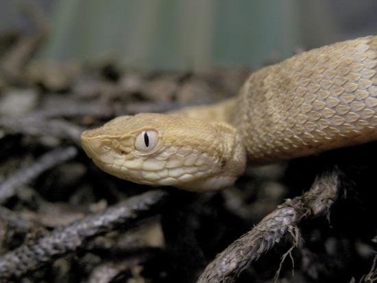 На Змеином острове в Бразилии живёт столько ядовитых змей, что власти запретили его посещение
